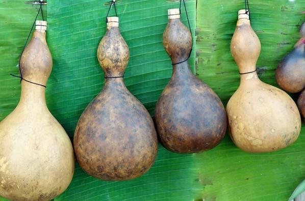 kalebassen-trocknen